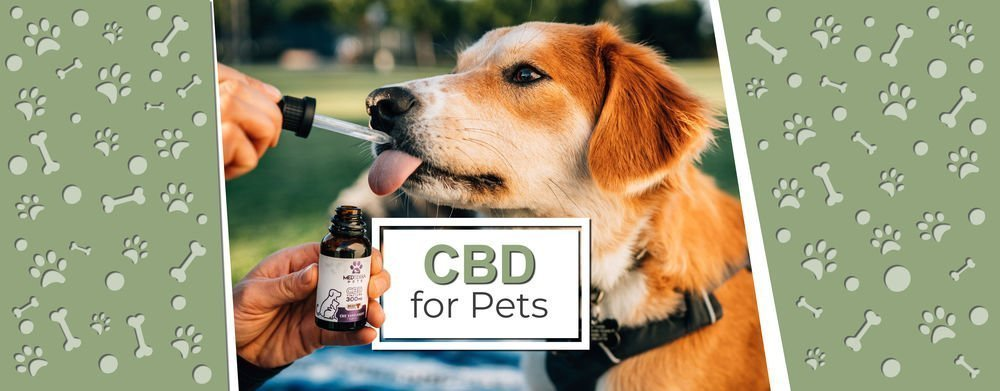 CBD for Pets - Naia CBD Boutique