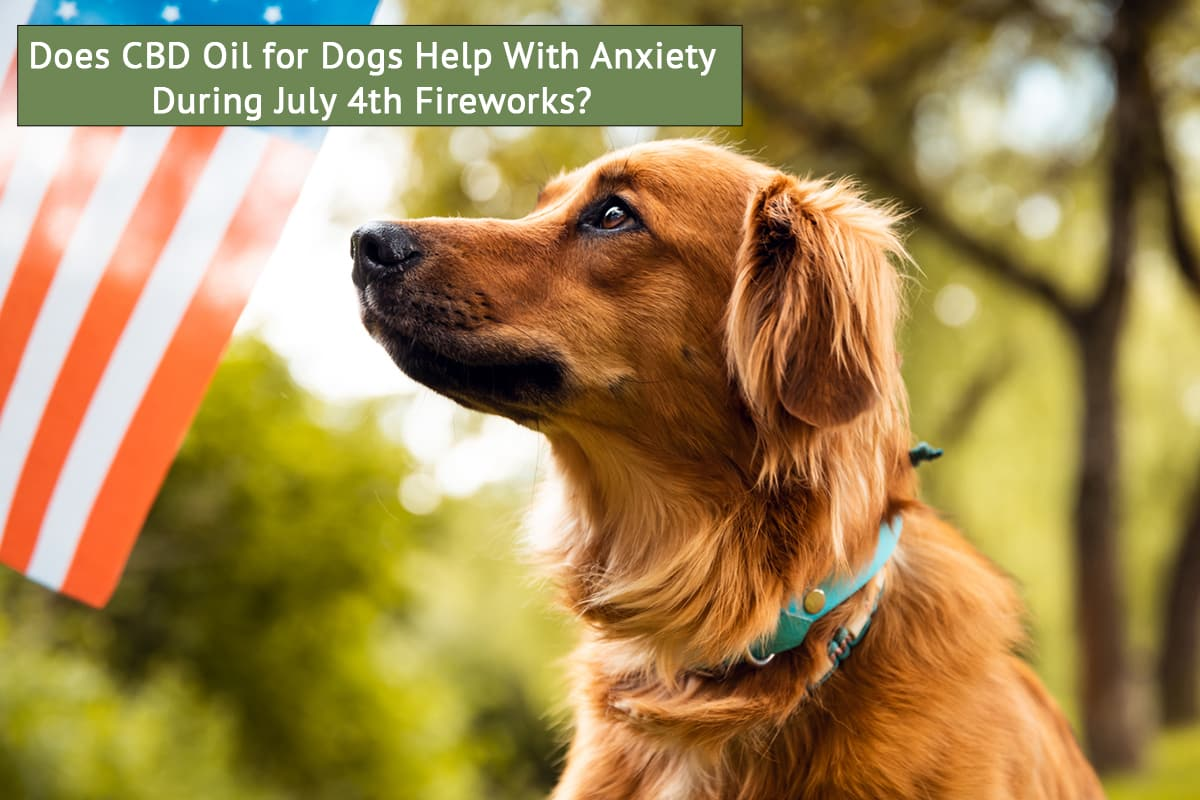 Does CBD oil for dogs help with anxiety during July 4th fireworks